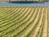 harvest-201001