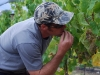 harvest-201001_1